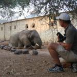 Saving a desert elephant