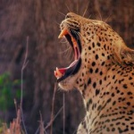 THE MAMBA – 15 NIGHTS – SOUTH AFRICA & VIC FALLS & KRUGER & CAPE TOWN