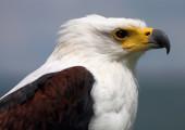 THE FISH EAGLE FLY-IN SAFARI – 9 NIGHTS – BOTSWANA