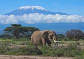 THE KILIMANJARO – 7 NIGHTS – TANZANIA