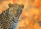 THE EMERALD – 12 NIGHTS – SOUTH AFRICA