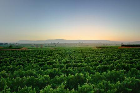 namaqua-wines