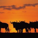 THE MARA – 15 NIGHTS – KENYA & TANZANIA