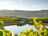 Eye Recommend: Creation Wines