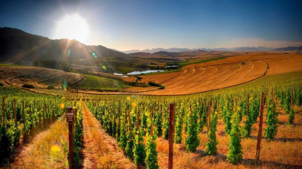 wc_franschhoek_lormarins_ar_wines_1