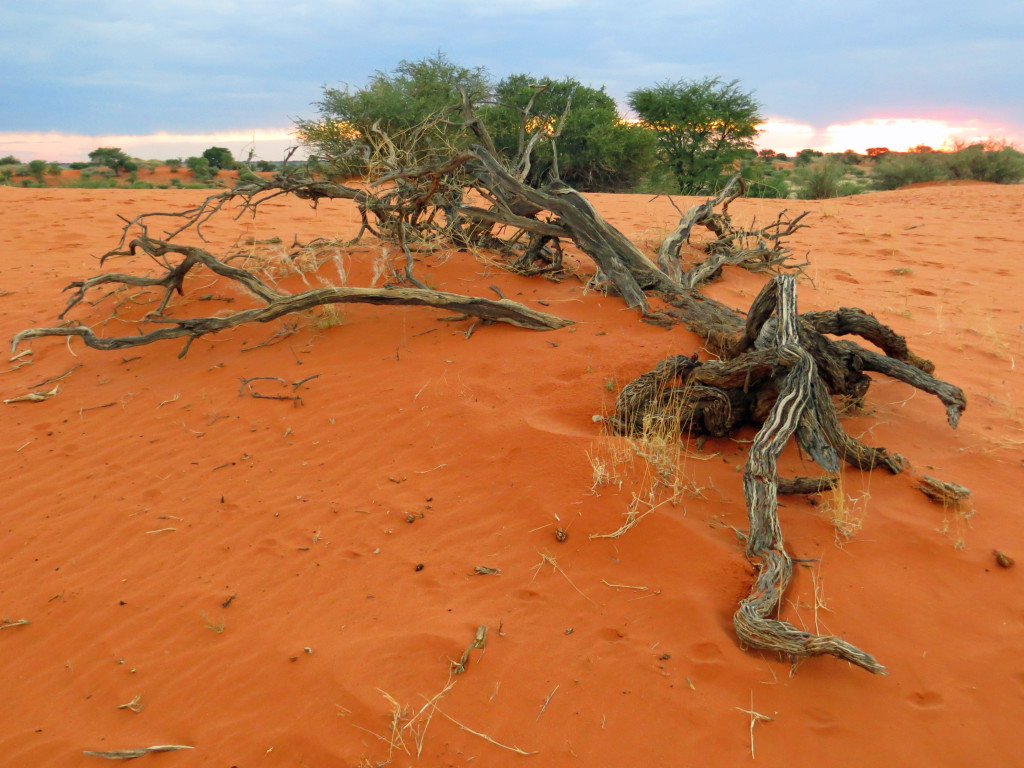 10 things you did not know about Namibia - Eye See Africa