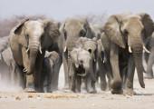 THE DAMARA DIKDIK – 14  NIGHTS – NAMIBIA