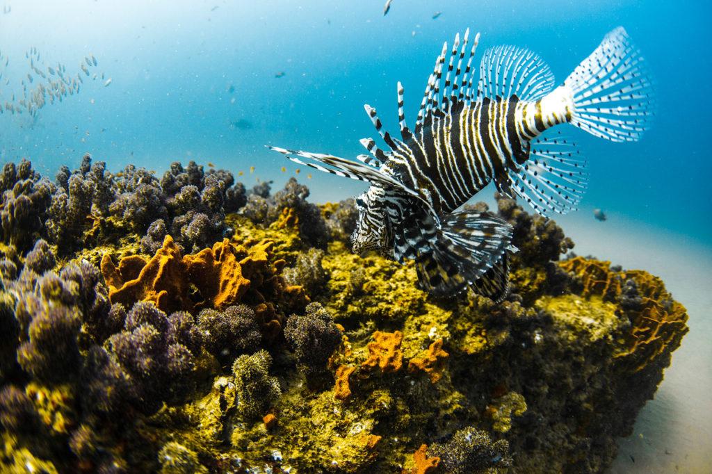 Snorkelling Mozambique