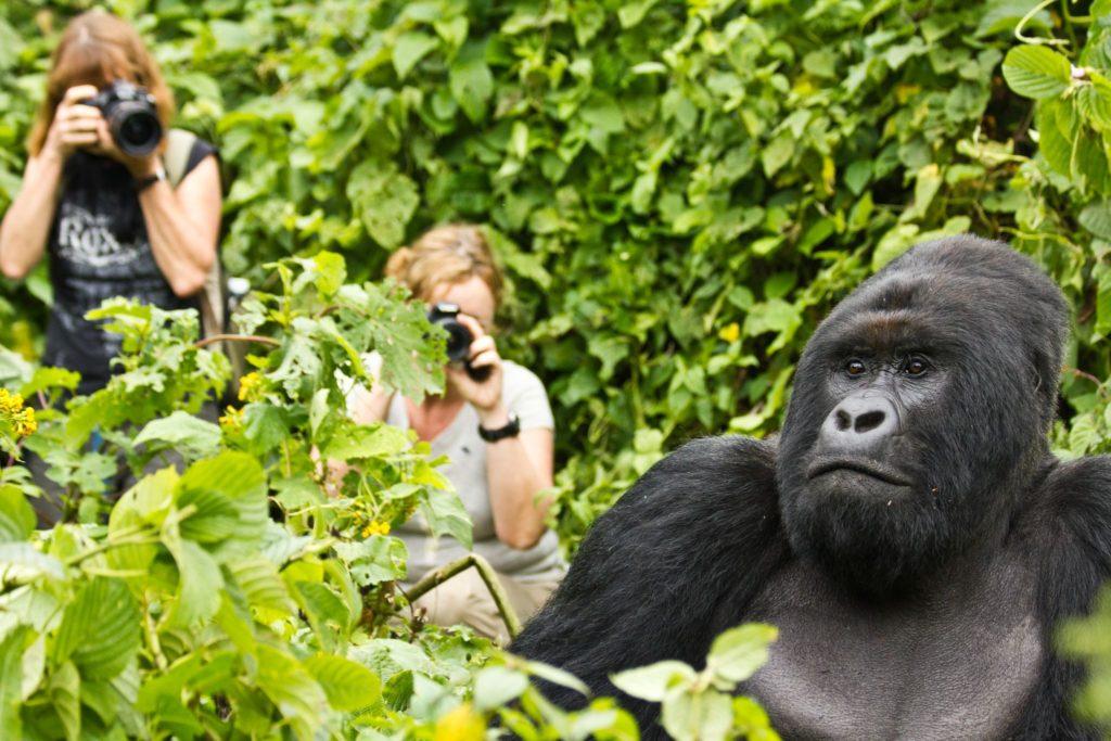 Visit Africa: Eye See Africa - Gorilla Trekking