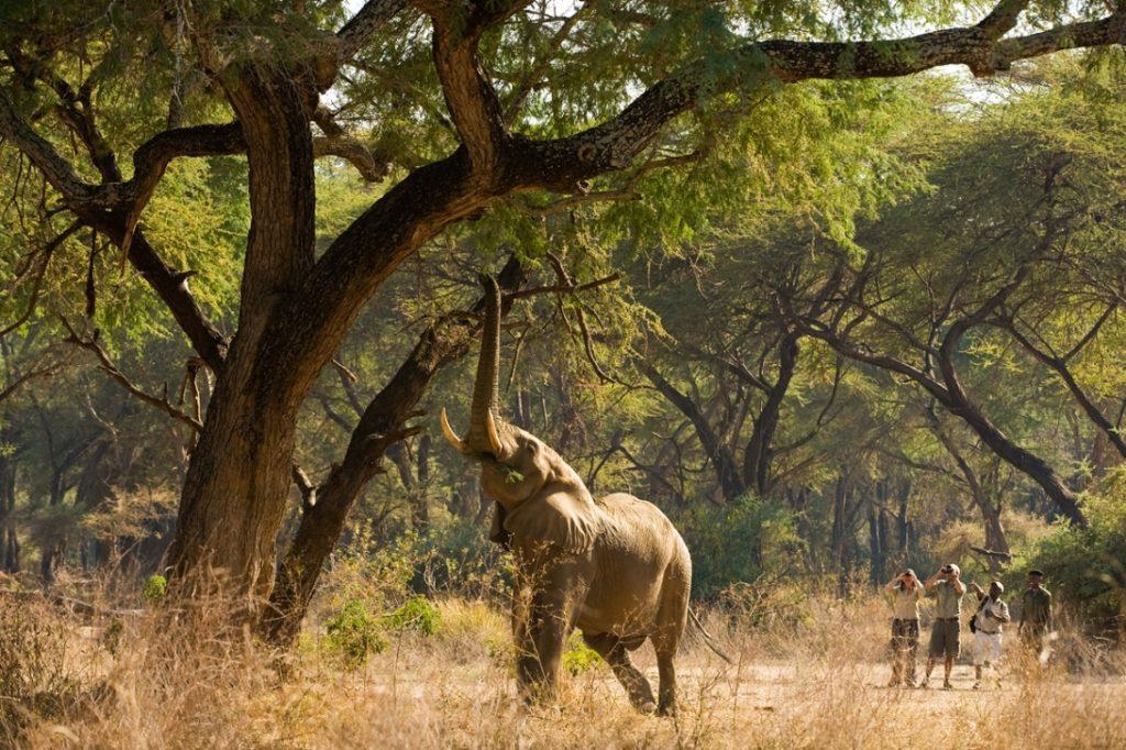 Visit Africa - Eye See Africa - Walking safaris
