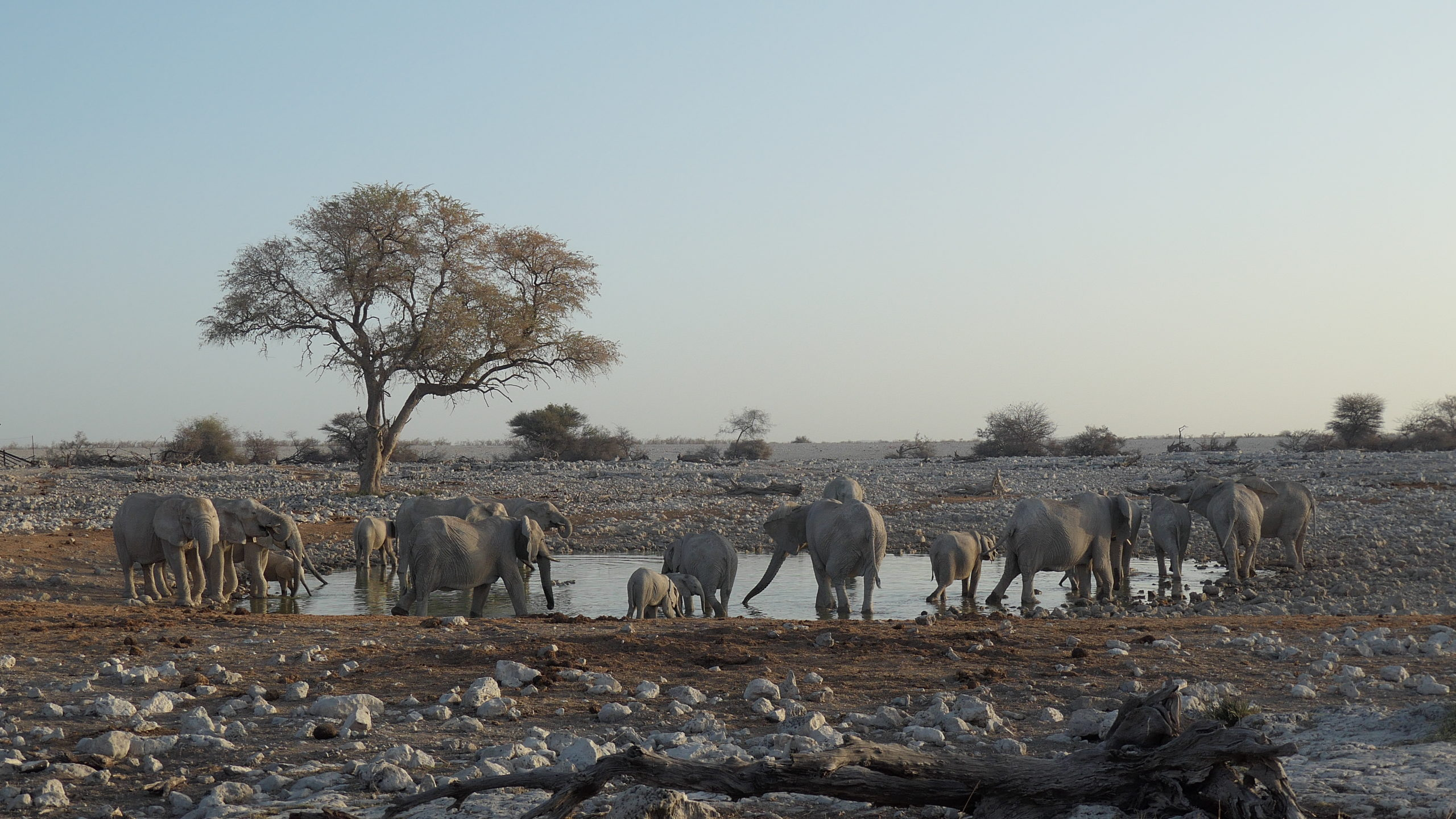 Elephants quench their thirst at a watehole.
